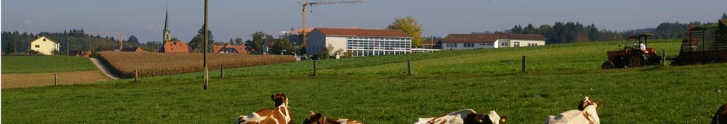 Kühe und Schule gesamt